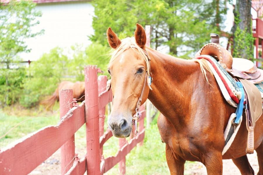 Sunny Farms North » Horseback Riding Atlanta